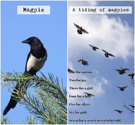 Nombres raros para grupos de animales en inglés - Aprende ...