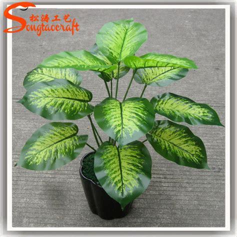Noms de plantes pots en plastique pour plantes plantes ...