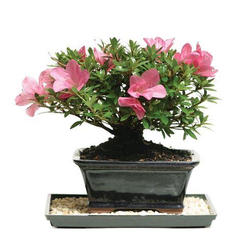 Non-Flowering - Indoor Plants - Garden Plants & Flowers ...