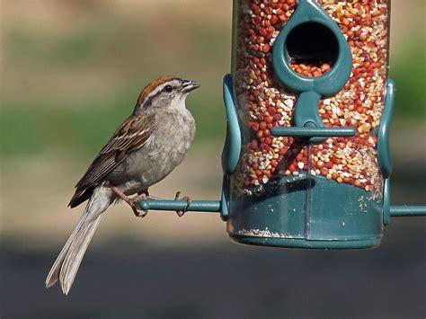North Carolina | Photos of Birds by Common Name by Sid Hamm