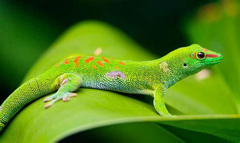 noticias nacionales Invasión de especies exóticas amenazan ...