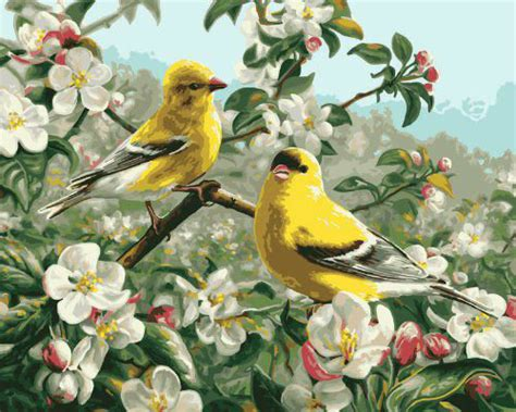 Nuestra colección de pájaros que hablan y cantan | Juegos ...