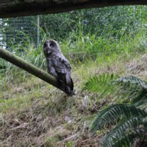 Nuestra experiencia en Zoo de Santillana del Mar, con ...