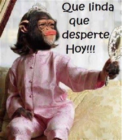 Nuevas Imagenes De Monos Con Frases Chistosas Para ...