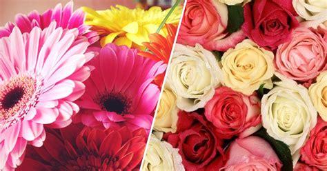 O significado das flores   Que flor significa o quê? | Like3ZA