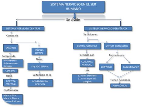 Objetivos   Sistema Nervioso Humano