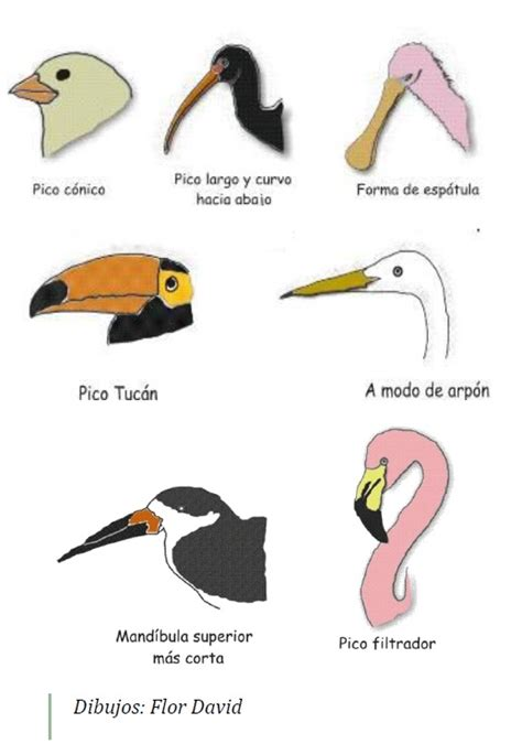 Observación de aves silvestres en libertad | SAN PEDRO ...