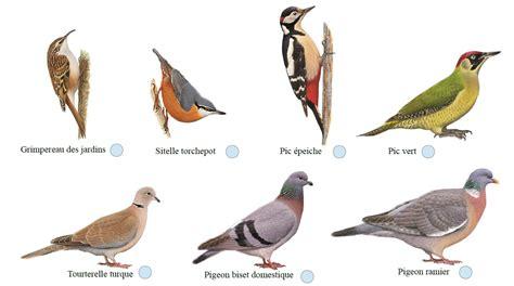 Observer les oiseaux avec la LPO | Vive les SVT !, les ...
