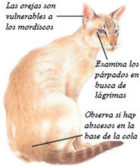 octubre 2008 ~ R3 Pets