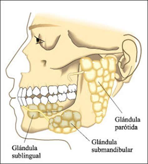 OdontoBlog: Cáncer de glándulas salivales, un mal desconocido
