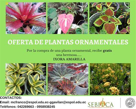 Oferta de Plantas Ornamentales | Sebioca