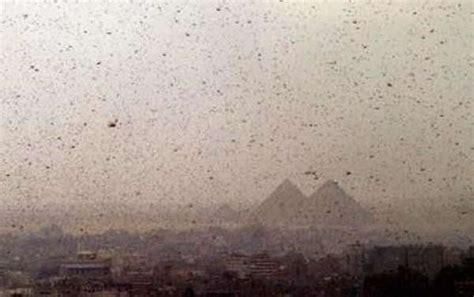 OMG : Lebih 30 Juta Belalang Menyerang Mesir (4 Gambar ...