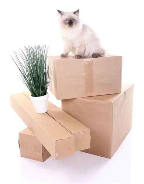 Once torres para gatos que puedes hacer en casa | EROSKI ...