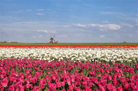 Onde encontrar os cantos mais floridos da Europa na ...