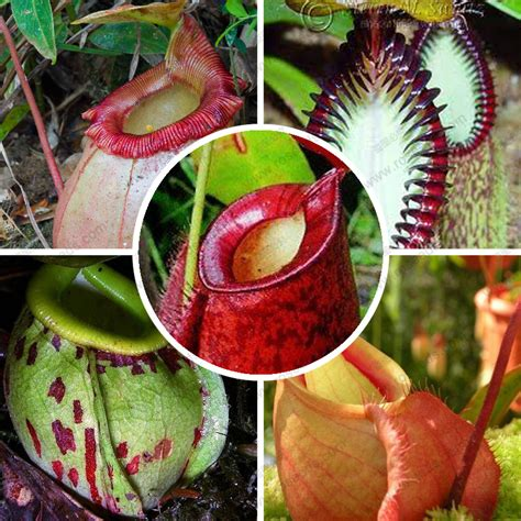 Online Buy Wholesale carnivorous plant from China ...