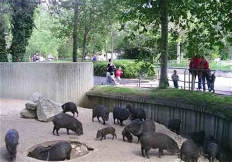 Opiniones de Parque zoológico de Madrid