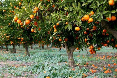 Orange | Britannica.com