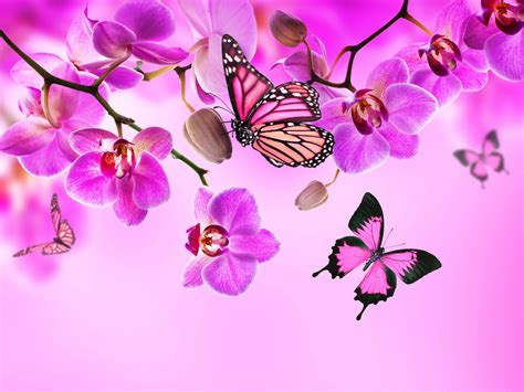 Orchid Butterflies Pink color Flowers wallpaper ...