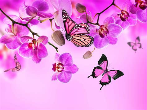 Orchid Butterflies Pink color Flowers wallpaper ...