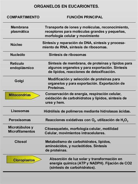 ORGANELOS EN EUCARIONTES
