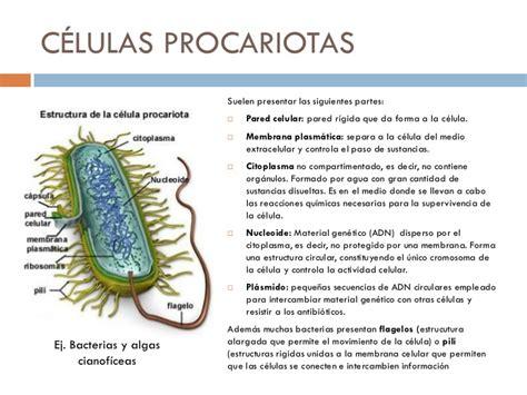 Organismos unicelulares y células procariotas