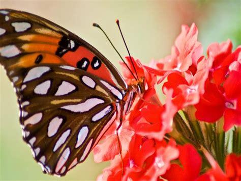 Originales postales con Mariposas para Protector de Pantalla