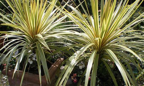ornamental garden plants 1 | Living Props