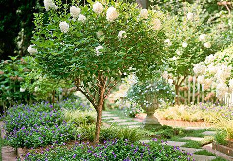 Ornamental Trees & Shrubs