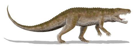 Ornithosuchus - Wikipedia