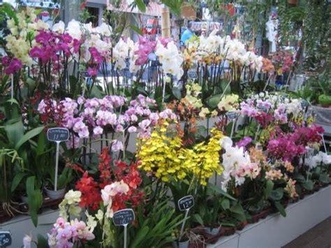 Orquideas de todo tipo y de todos los colores en el ...