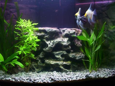 Os presento a mis peces