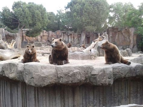 Osos: fotografía de Zoo Aquarium de Madrid, Madrid ...