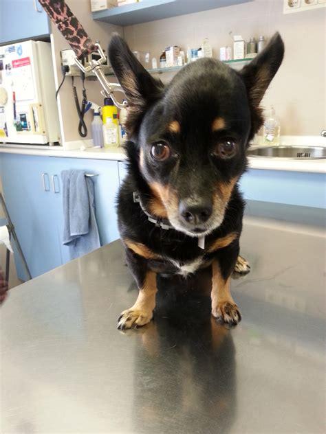 osteosarcoma cabeza perro   historiasveterinarias/vetstories