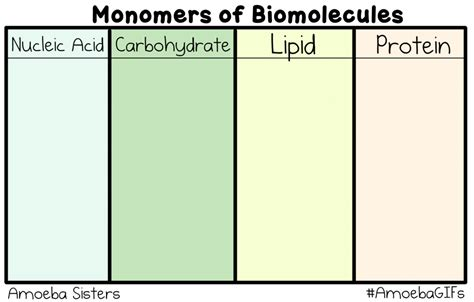 Our new GIF shows the monomers (building blocks) of ...