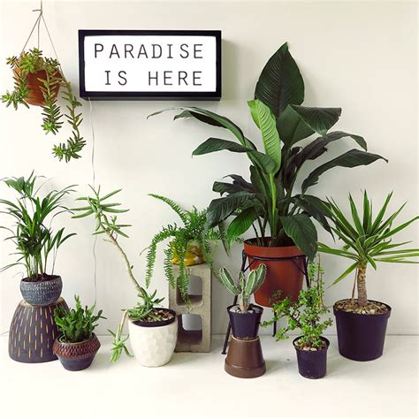 Our Top 7 Unkillable Indoor Plants + The Ultimate Desk ...