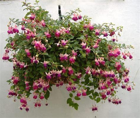 Outdoor Plants: Fuchsia | www.coolgarden.me