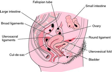 Ovarian endometriosis | definition of ovarian ...