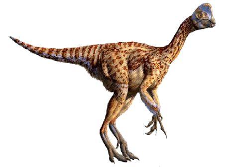 Oviraptor | Dinosaur Wiki | FANDOM powered by Wikia