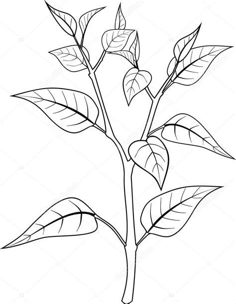 Página para colorear con planta — Vector de stock ...