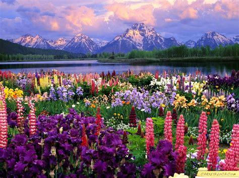 Paisajes de Ensueño: Paisajes de Flores