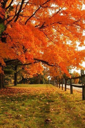 paisajes otoñales del mundo gratis | ARBOLES | Pinterest ...