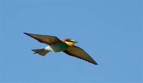 Pájaro de colores hd 1024x600   imagenes   wallpapers ...