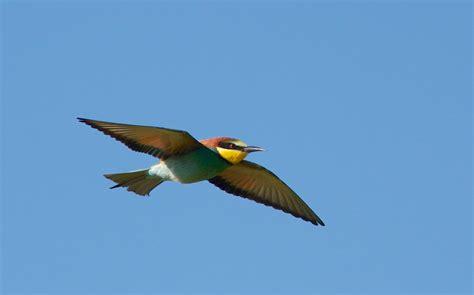 Pájaro de colores hd 2560x1598 - imagenes - wallpapers ...