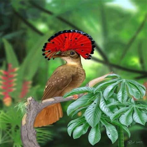 Pajaro Gracioso Imagen De Aves   Imagenes Bonitas   Frases ...