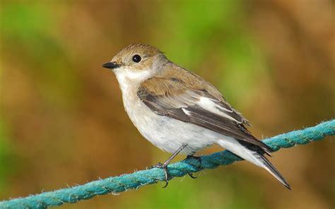 Pájaro silvestre - 1680x1050 :: Fondos de pantalla y ...