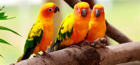PÁJAROS (Aves) - Tipos y nombres de pájaros explicados uno ...