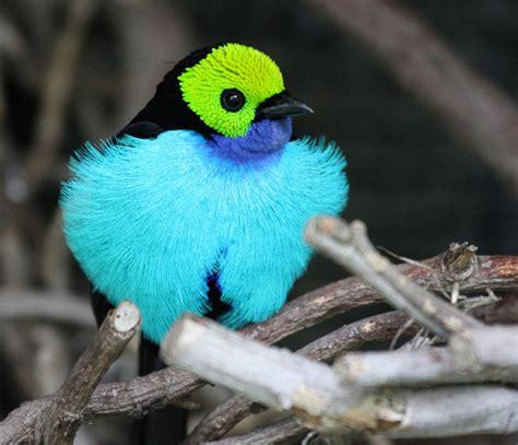 Pajaros de todas partes del mundo: Aves exoticas