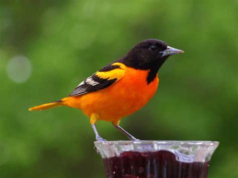 Pájaros exóticos archivos   La web de Ainhoa
