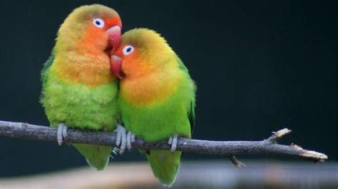 Pájaros exóticos - Los pájaros exóticos más bellos del mundo