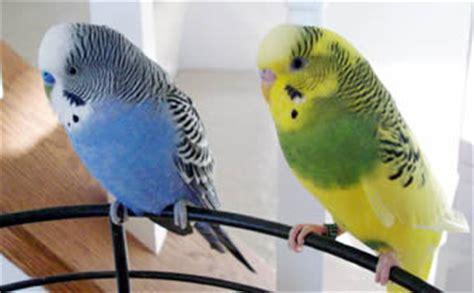 Pájaros   Mundo Animal